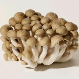 Brown Beech (bundel) verpakt per 125 gram