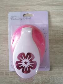 Blume 3 CCC-5008