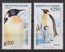 Chili koning pinguïn