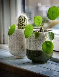 Bloempot spikkels groen
