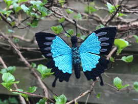 Papilio ulysses butterfly.