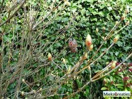 Haakpatroon dagpauwoog vlinder