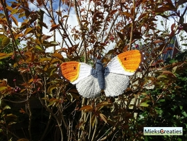 the orange tip