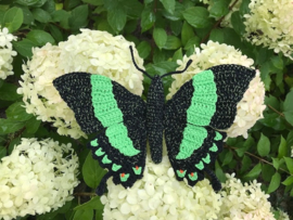 green butterly, Papilio palinurus vlinder