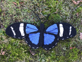 Sara longwing vlinder