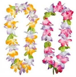 Hawaii krans spring