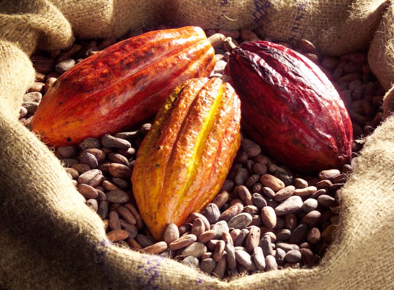 Criollo Bean.png