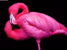 Pink Flamingo White Dragon
