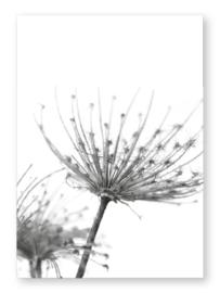 Kaart zwart wit Dendelon met glans  | Jots