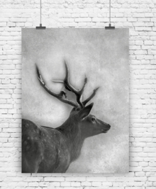 Poster Hert A3 formaat | Jots