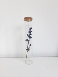 Glazen Jar cilinder met een Ridderspoor