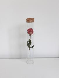 Glazen Jar cilinder met een Roos