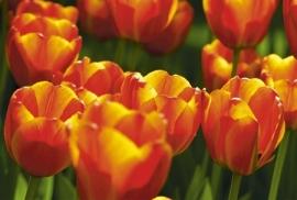 Jardin de Fleur - Vak 107