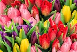 Floweressences - Vak 128