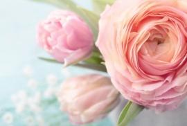 Floweressences - Vak 104