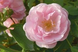 Jardin de Fleur - Vak 112