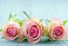 Floweressences - Vak 141