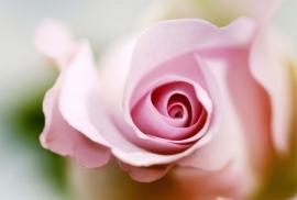 Jardin de Fleur - Vak 118