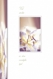 Memories - Vak 119