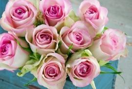 Floweressences - Vak 146