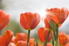 Jardin de Fleur - Vak 123