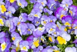 Jardin de Fleur - Vak 128