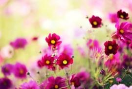 Floweressences - Vak 134