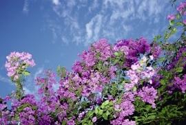 Jardin de Fleur - Vak 147