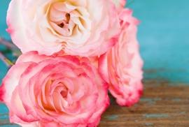 Floweressences - Vak 101