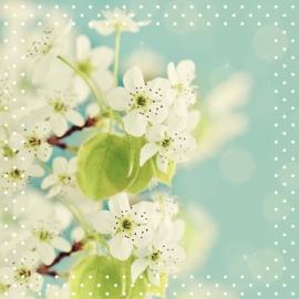 Blossoms postkaart - 103
