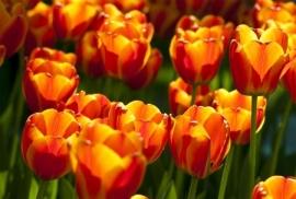 Jardin de Fleur - Vak 127