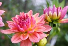 Floweressences - Vak 129