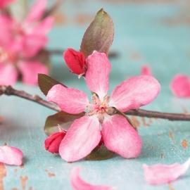 Blossoms postkaart - 104