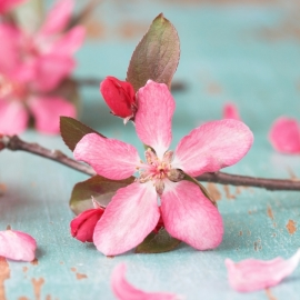 Blossoms 12x13,5 cm - Vak 104