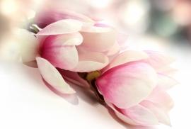 Floweressences - Vak 107