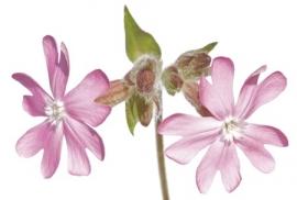 Jardin de Fleur - Vak 111