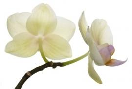 Jardin de Fleur - Vak 104