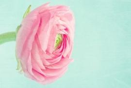 Floweressences - Vak 143