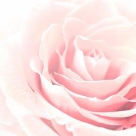 Blossoms postkaart - 133