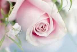 Floweressences - Vak 148