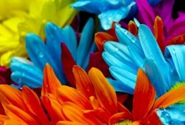 Floweressences - Vak 126