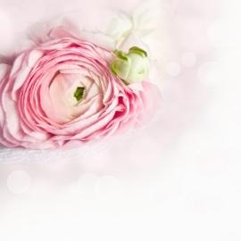 Blossoms postkaart - 137