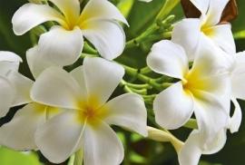 Jardin de Fleur - Vak 113