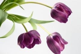 Jardin de Fleur - Vak 119