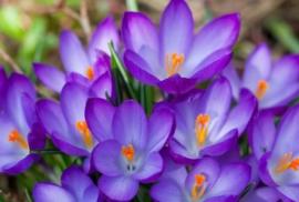 Floweressences - Vak 131