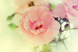 Floweressences - Vak 147