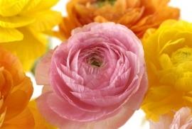 Jardin de Fleur - Vak 132