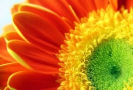 Floweressences - Vak 132