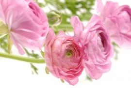 Jardin de Fleur - Vak 121