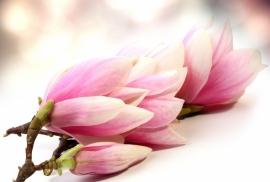 Floweressences - Vak 105